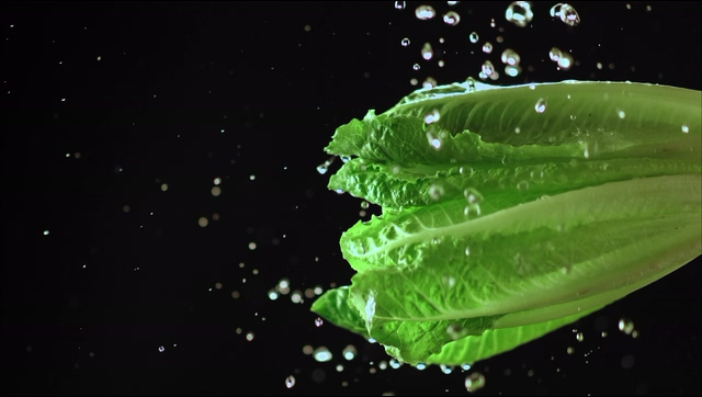 4K水珠拍打在一颗油麦菜上视频