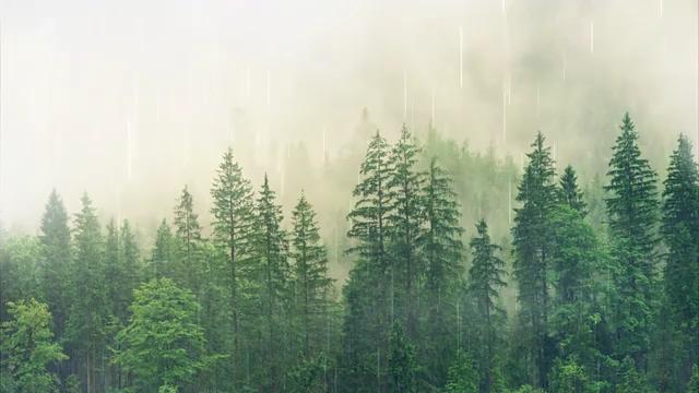 下雨天的森林背景视频