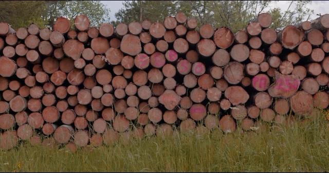 4K砍伐木材视频