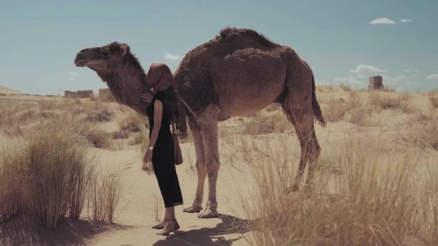 沙漠上一个女人和骆驼视频