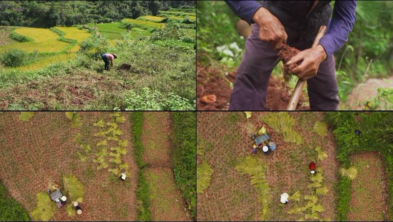 中国农村田地里干活的人视频素材