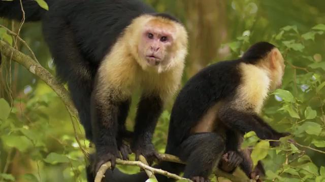 野生动物猴子视频素材下载