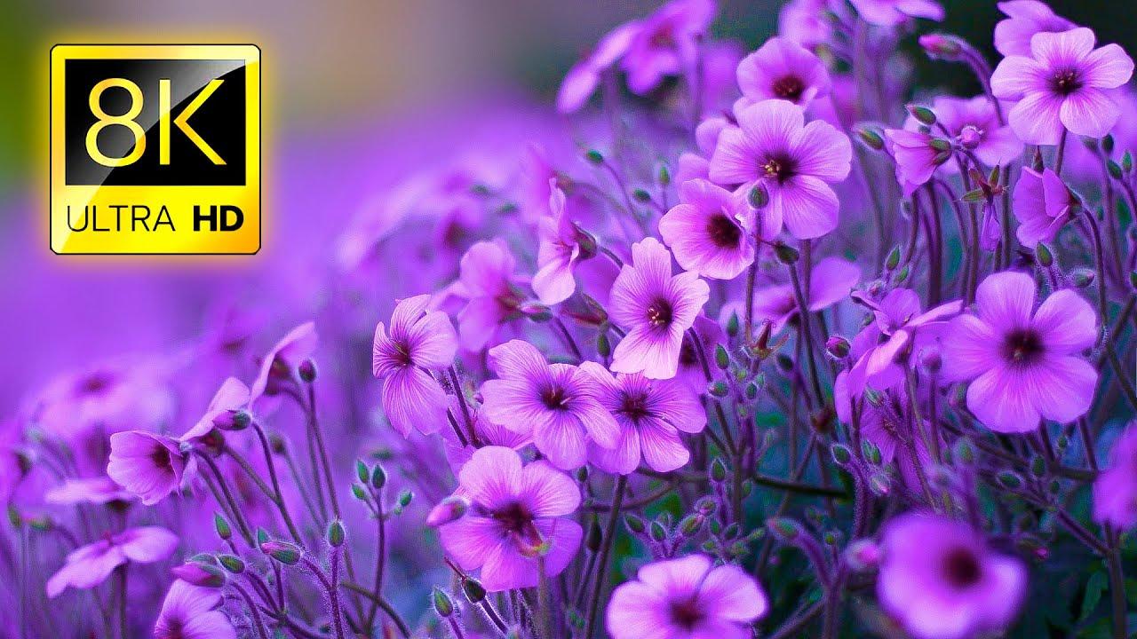 8KUHD花卉大合集20分钟视频素材