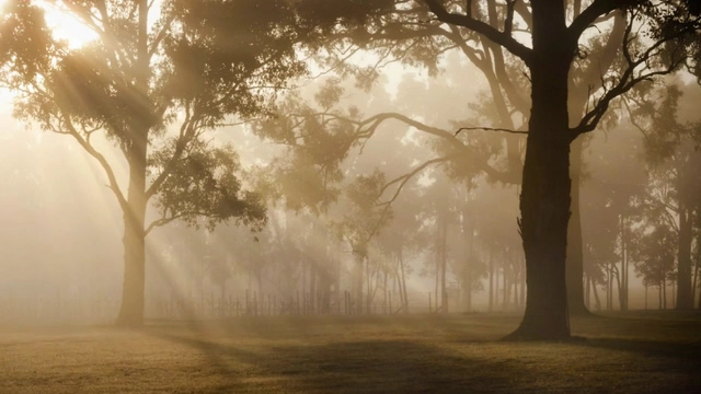 太阳光照射的森林里免费视频