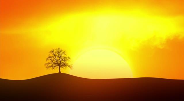 剪影太阳前的一棵树免费视频素材