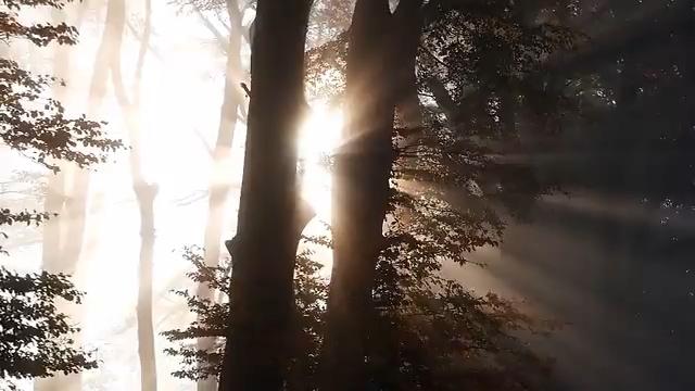 太阳光线射进树林视频素材