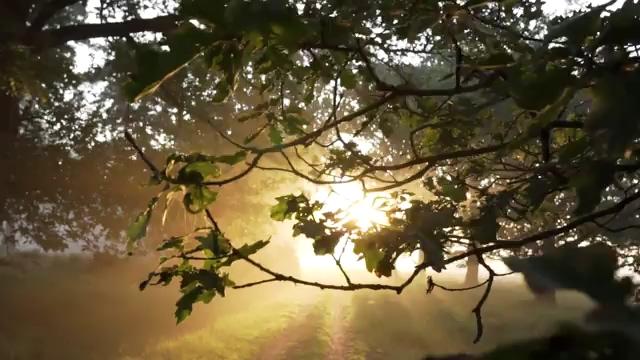 透过树枝看到太阳光线视频素材