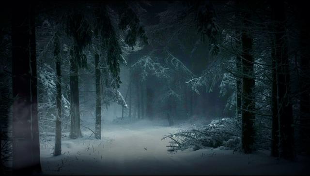 阴森的树林视频素材免费下载