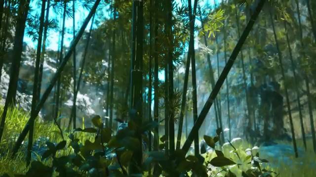 山谷里的竹林视频素材