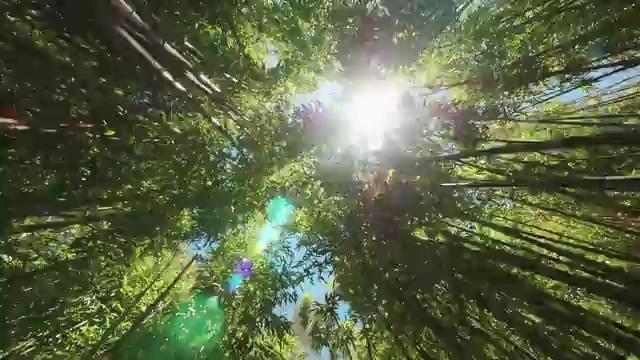 在竹林中前进视频素材