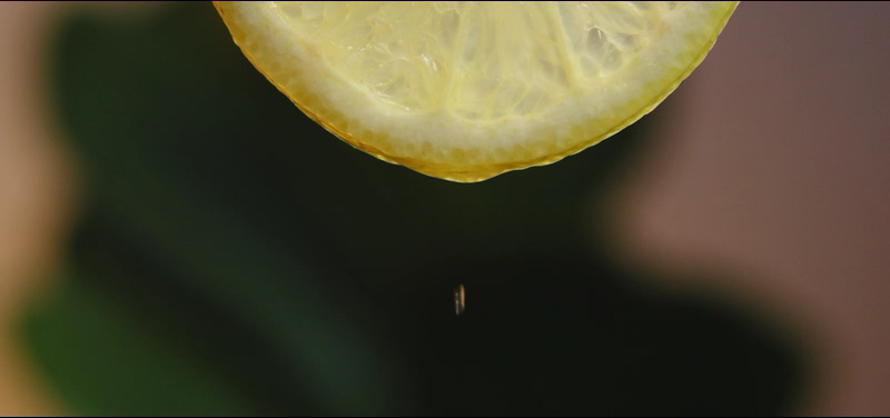 4K柠檬片上的水滴视频素材