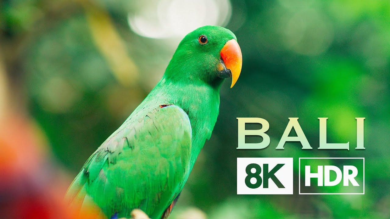 8K巴厘岛高饱和HDR60帧视频素材